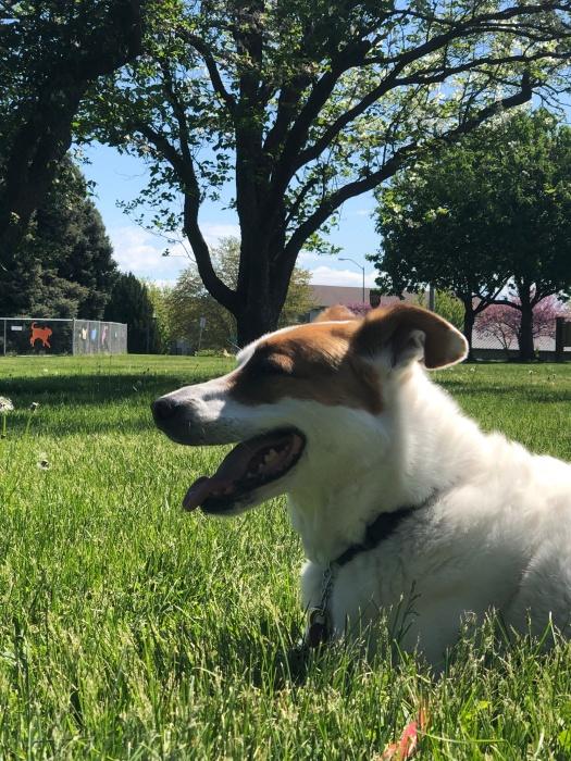 Rosie likes the Walla Walla park scene.