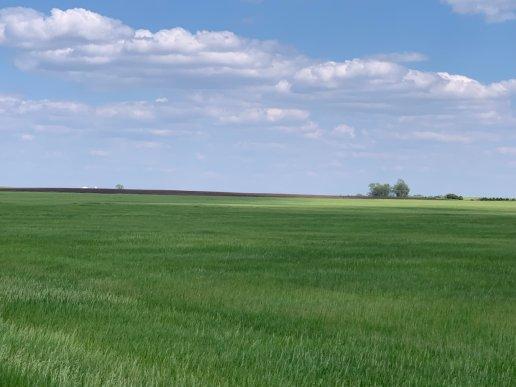 desmetgrass